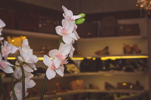 Gratis arkivbilde med arrangementer, blomst, fotografi, fotografia