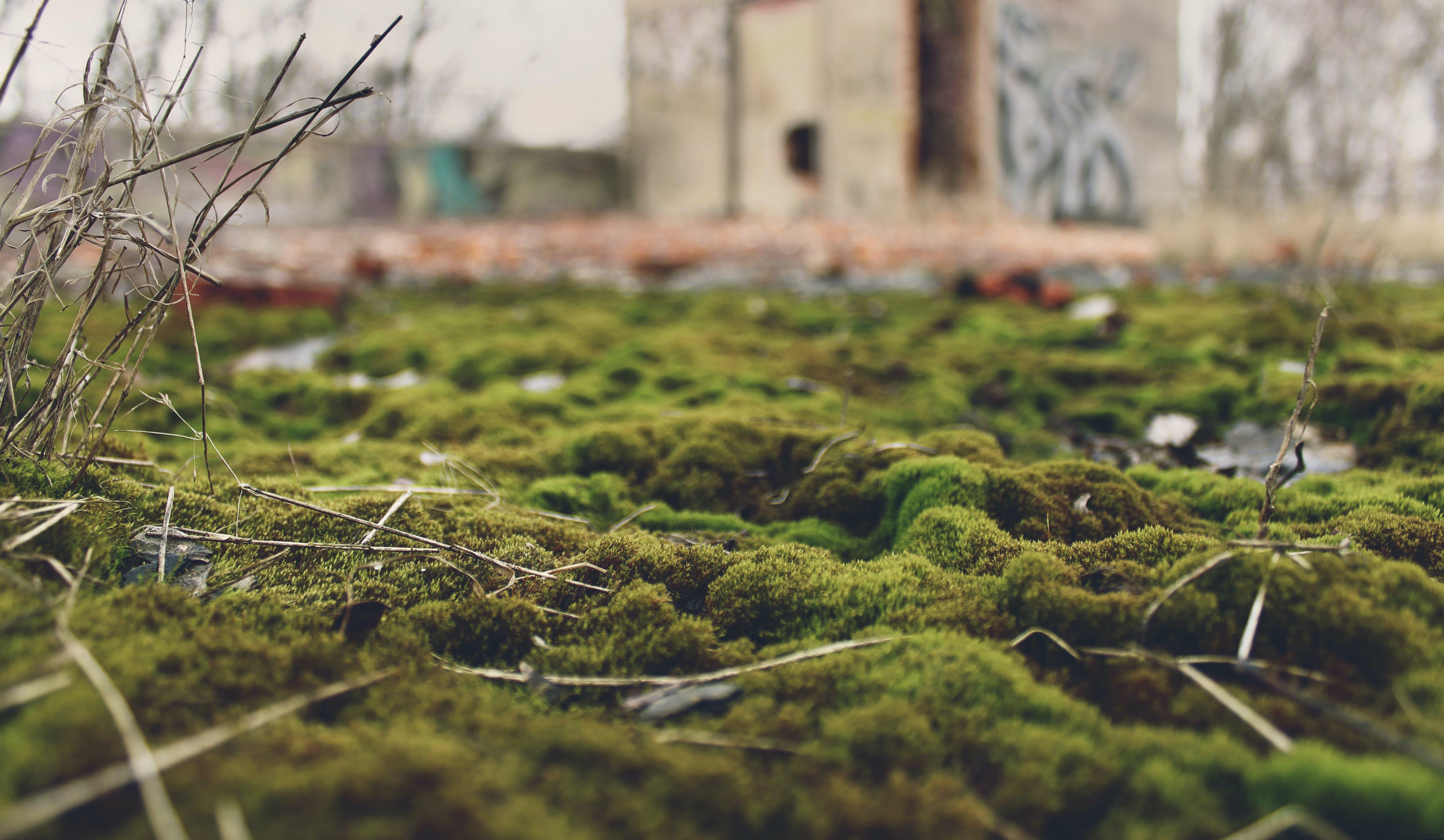 Free stock photo of abandoned, macro, moss