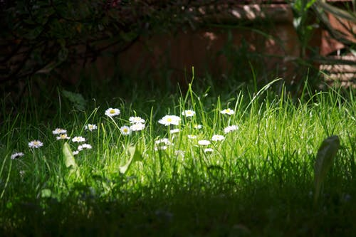 Free stock photo of flower garden, grass, light and shadow