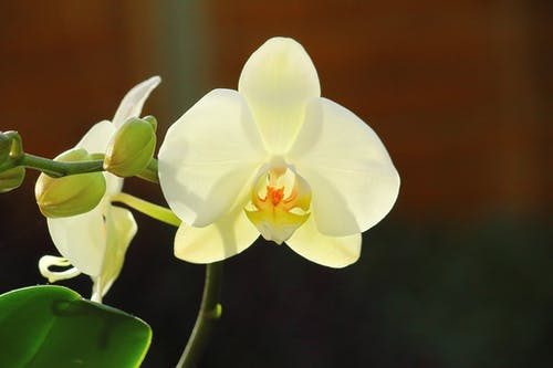 Free stock photo of beautiful flowers, orchid, white