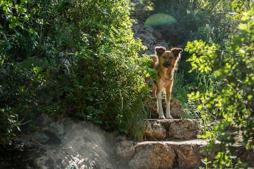 Безкоштовне стокове фото на тему «кроки, милий, собака, собачий»