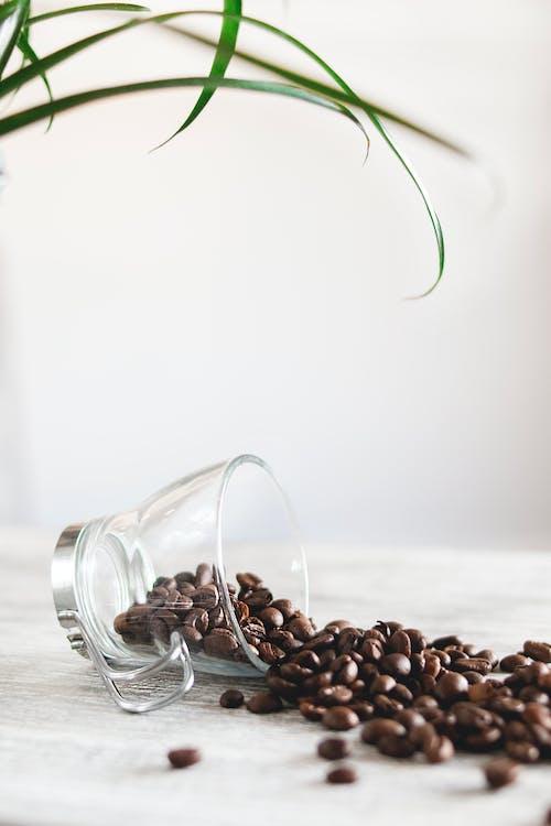 aromático, café, copa