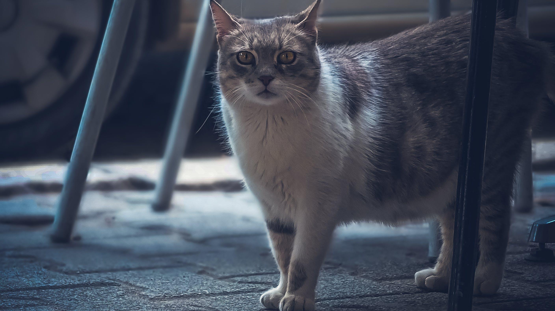 Základová fotografie zdarma na téma domácí mazlíček, fotografování zvířat, kočka, kočkovití