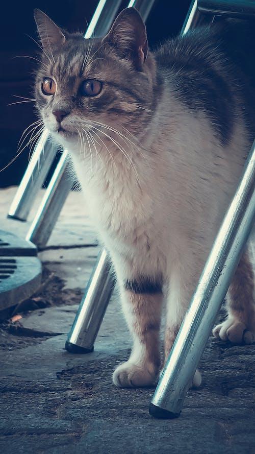 動物攝影, 小貓, 貓, 高速攝影 的 免費圖庫相片