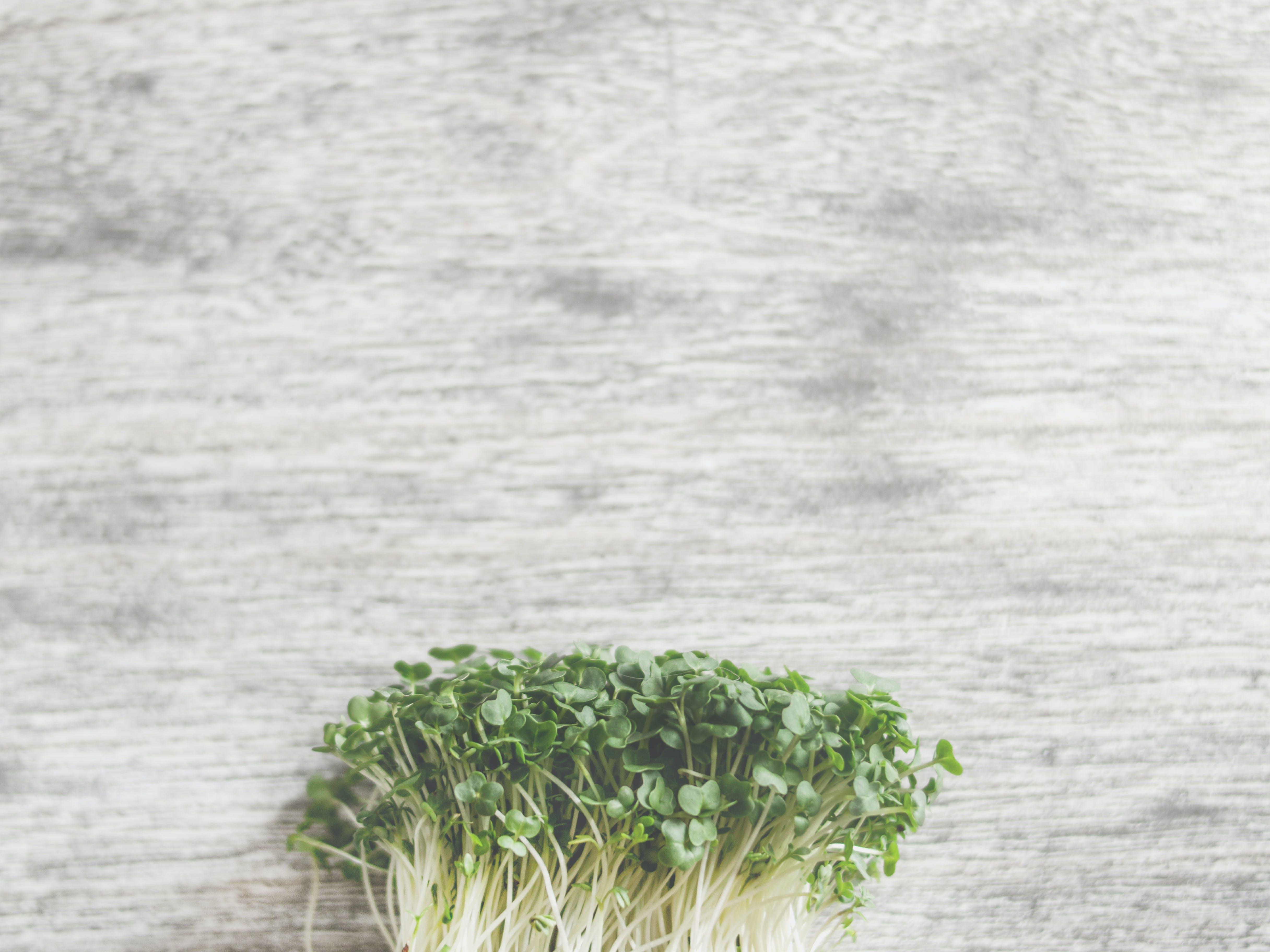 Základová fotografie zdarma na téma barvy, čerstvá zelenina, čerstvý, dřevěný