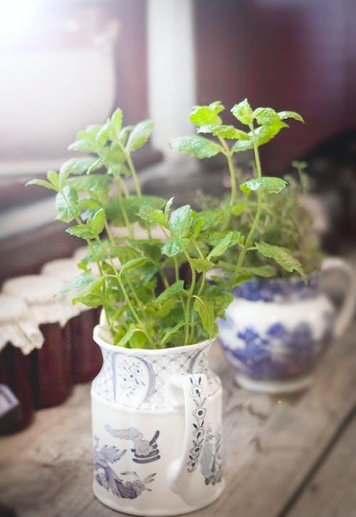 Foto stok gratis aromatik, daun mint, guci, herba