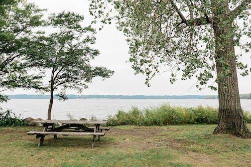 Photos gratuites de arbre, automne, banc