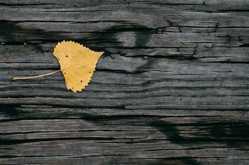 Photos gratuites de bois, bûche, cadre