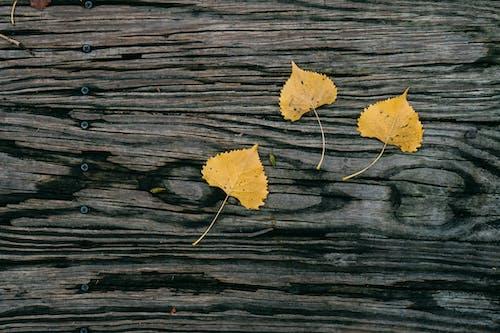 Photos gratuites de abstrait, arbre, arrière-plan