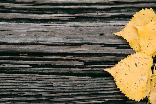 Photos gratuites de abstrait, arrière-plan, bois