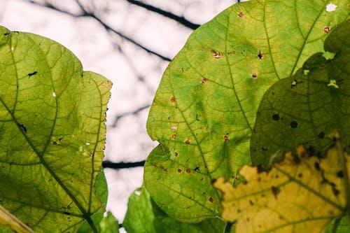 Photos gratuites de arbre, automne, brillant