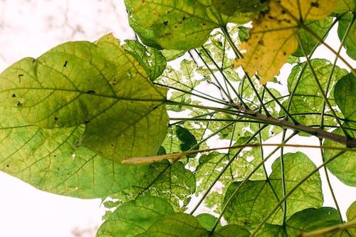 Photos gratuites de arbre, automne, branche