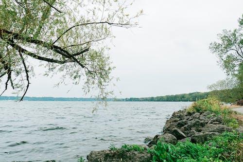 Photos gratuites de arbre, bois, eau