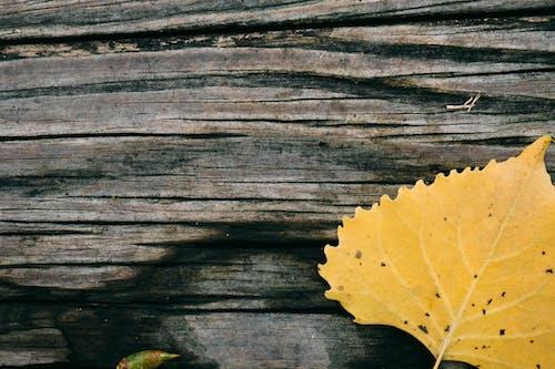 Photos gratuites de abstrait, arbre, automne
