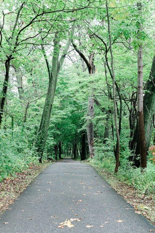 Photos gratuites de arbre, bois, chemin