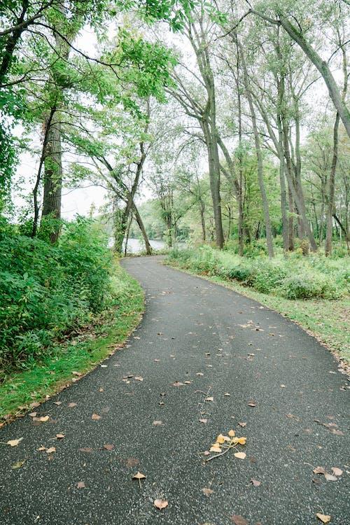 Photos gratuites de arbre, automne, bois