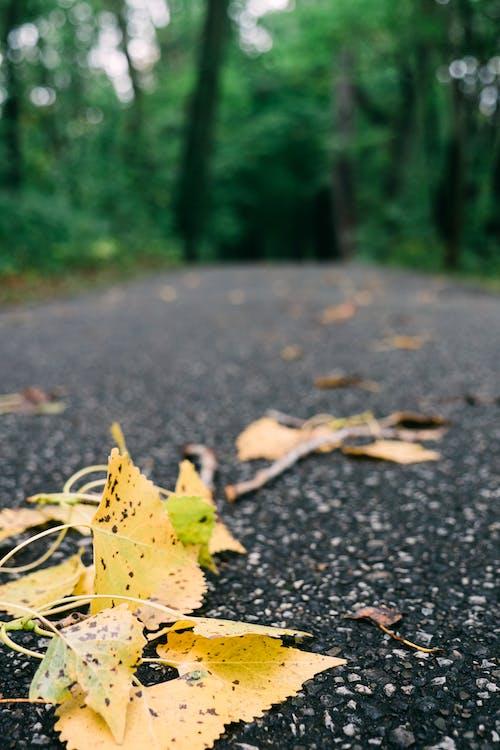 Photos gratuites de arbre, asphalte, automne