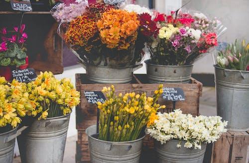 Immagine gratuita di bancarella, bocciolo, bouquet, casse di legno