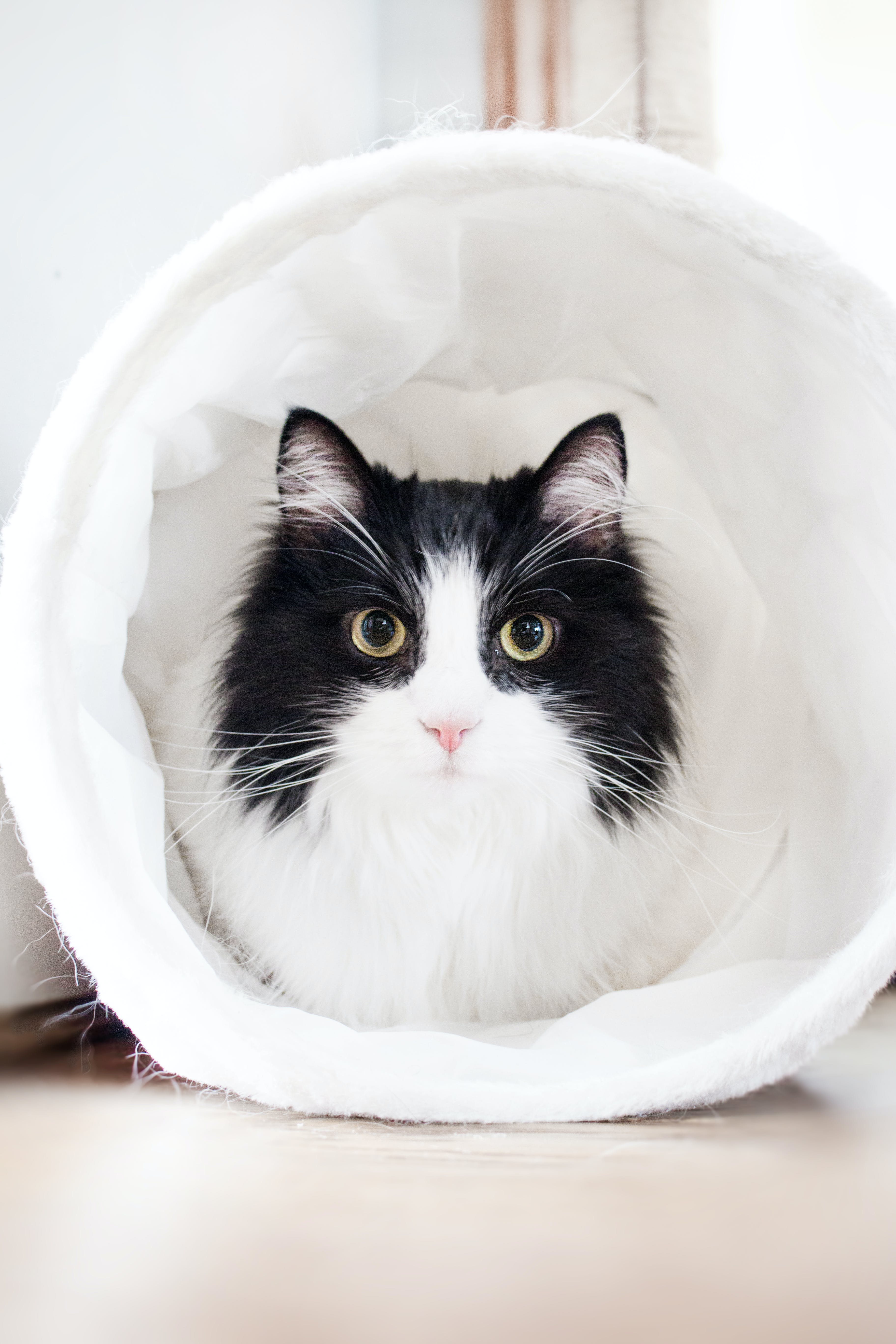 White and Black Cat Inside White Textile