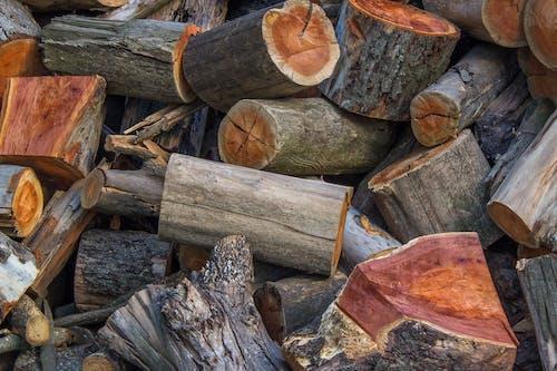 升火的木柴, 原本, 堆, 木柴 的 免费素材照片