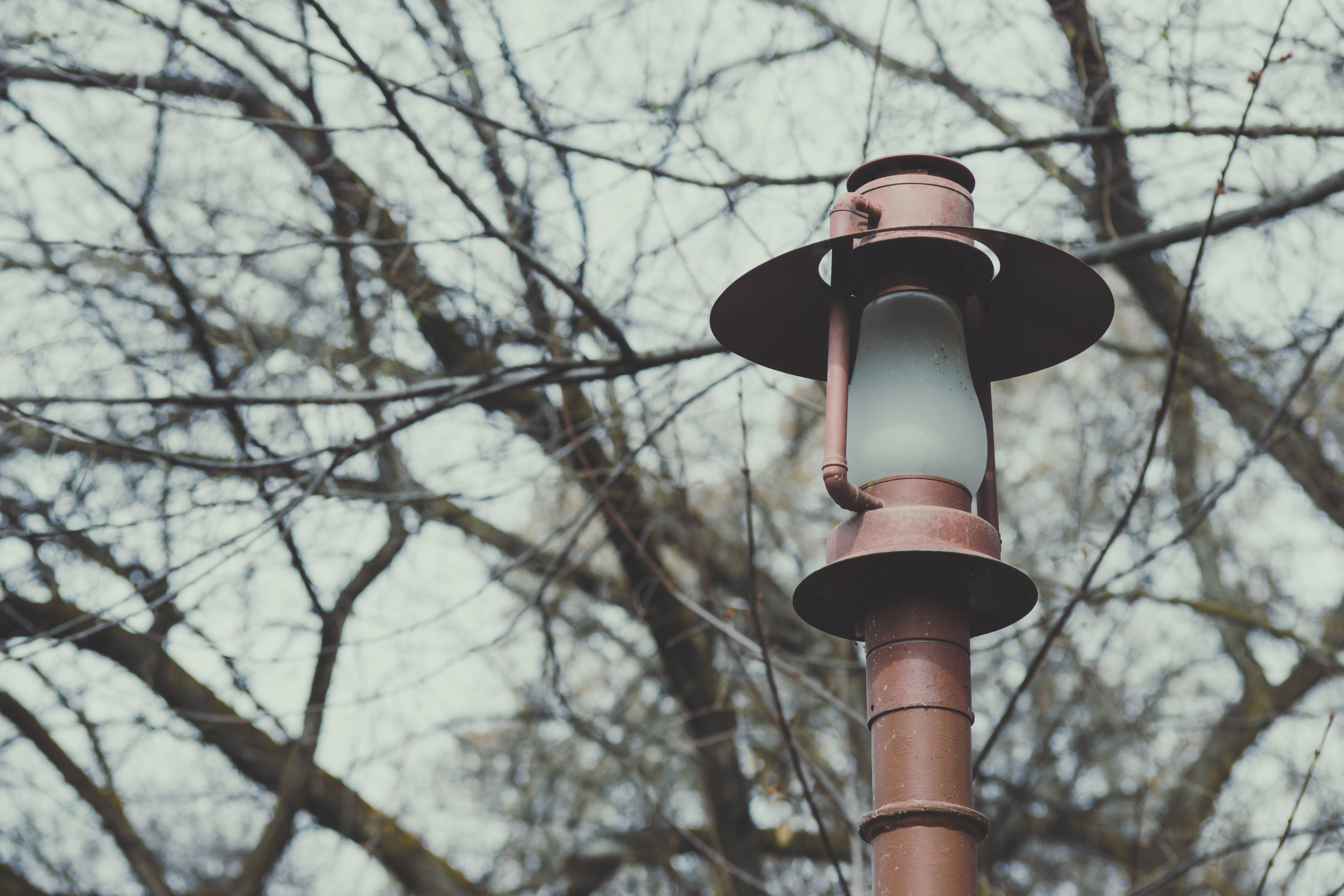 光, 分支機構, 原本, 天性 的 免費圖庫相片