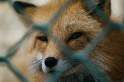 動物, 動物園, 哺乳動物, 小 的 免费素材照片