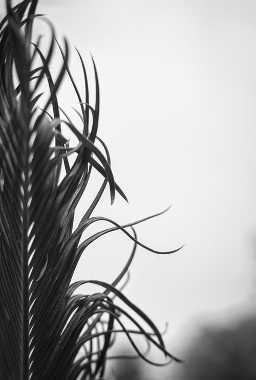 Kostenloses Stock Foto zu blatt, flora, gras