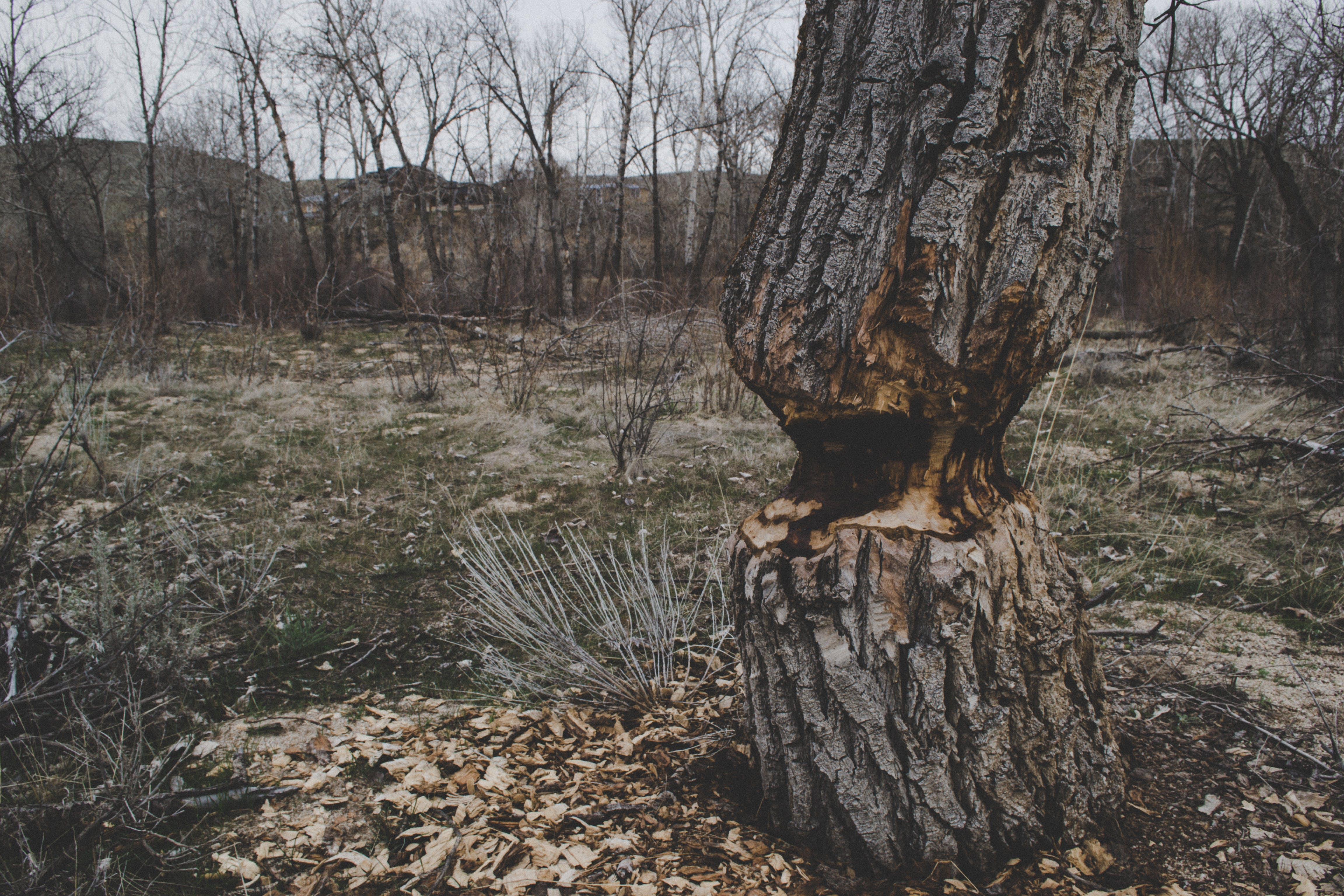 Photo of Brown Tree Trunk