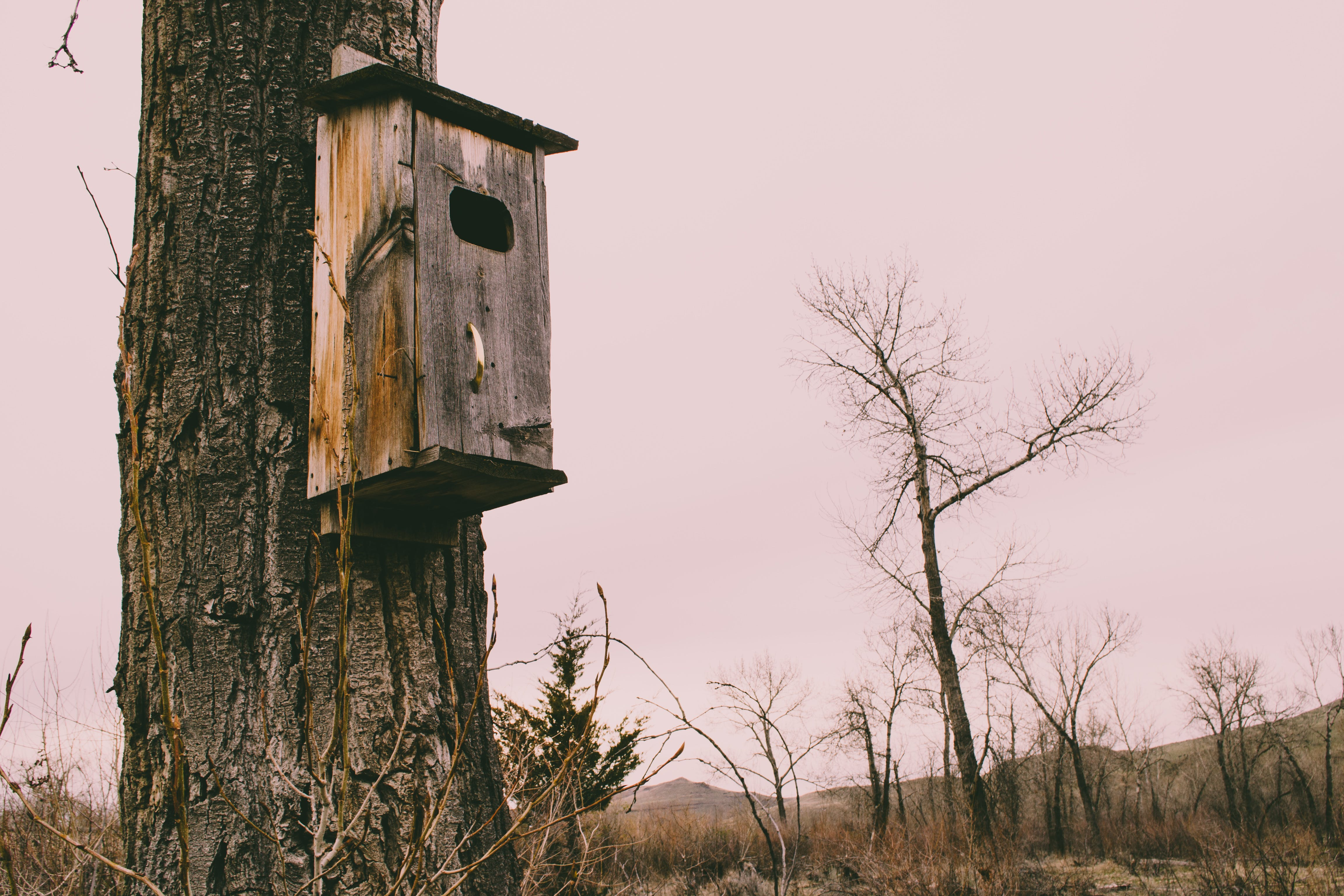 Photography of Brown Wooden Birdhouse