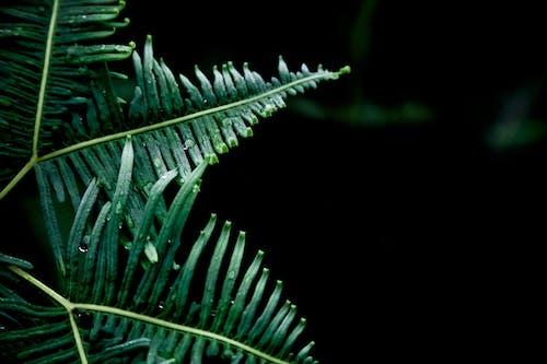 Fotos de stock gratuitas de helecho, húmedo, naturaleza, planta