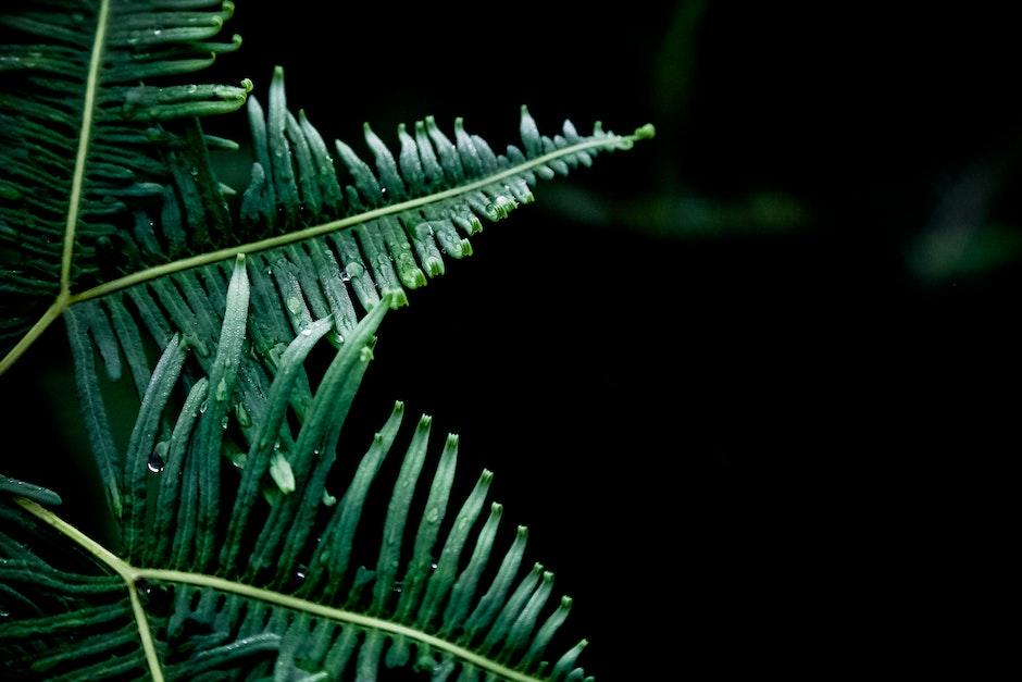 dew, fern, green