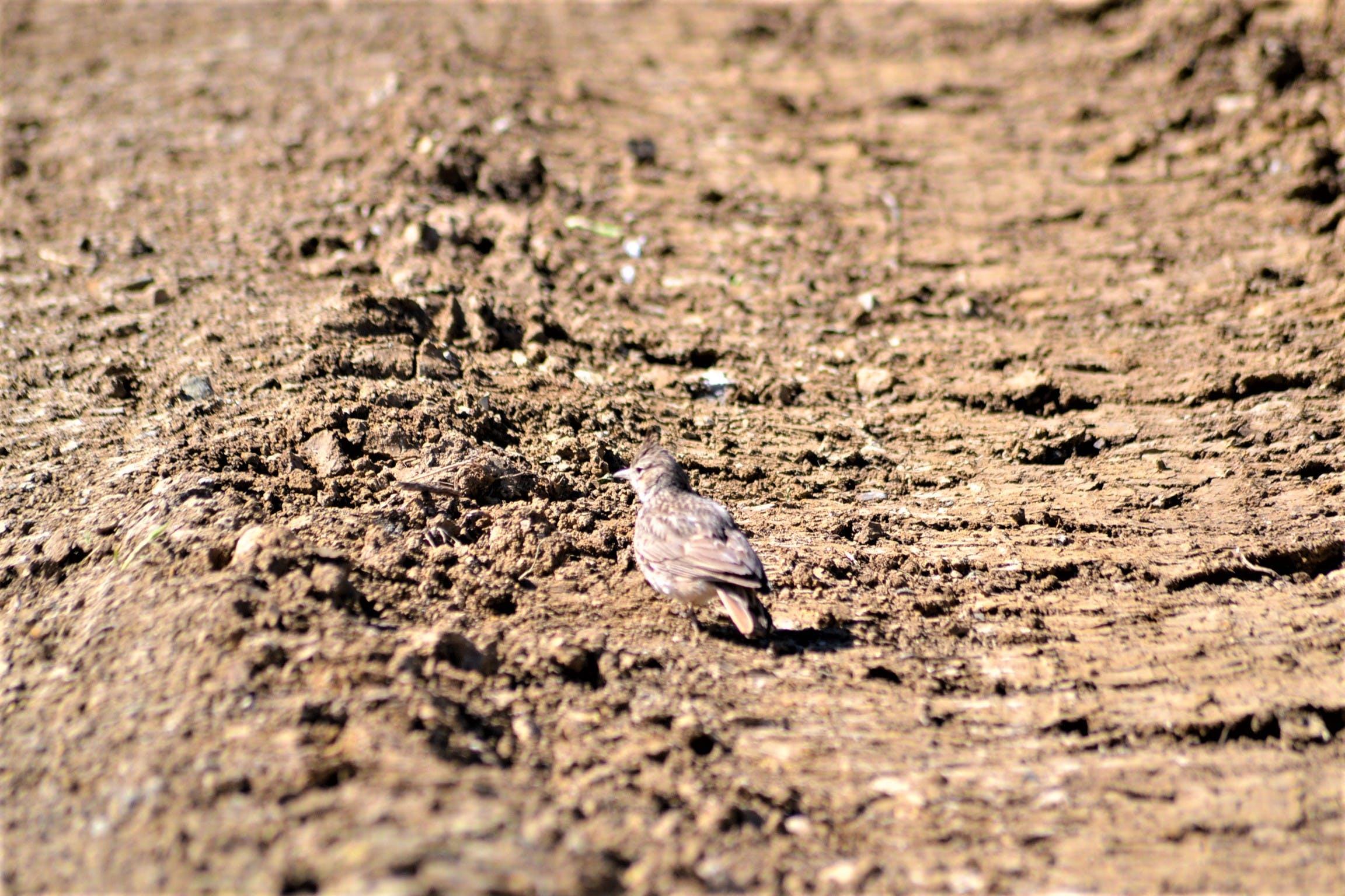 Free stock photo of bird, estepona, ground, nature
