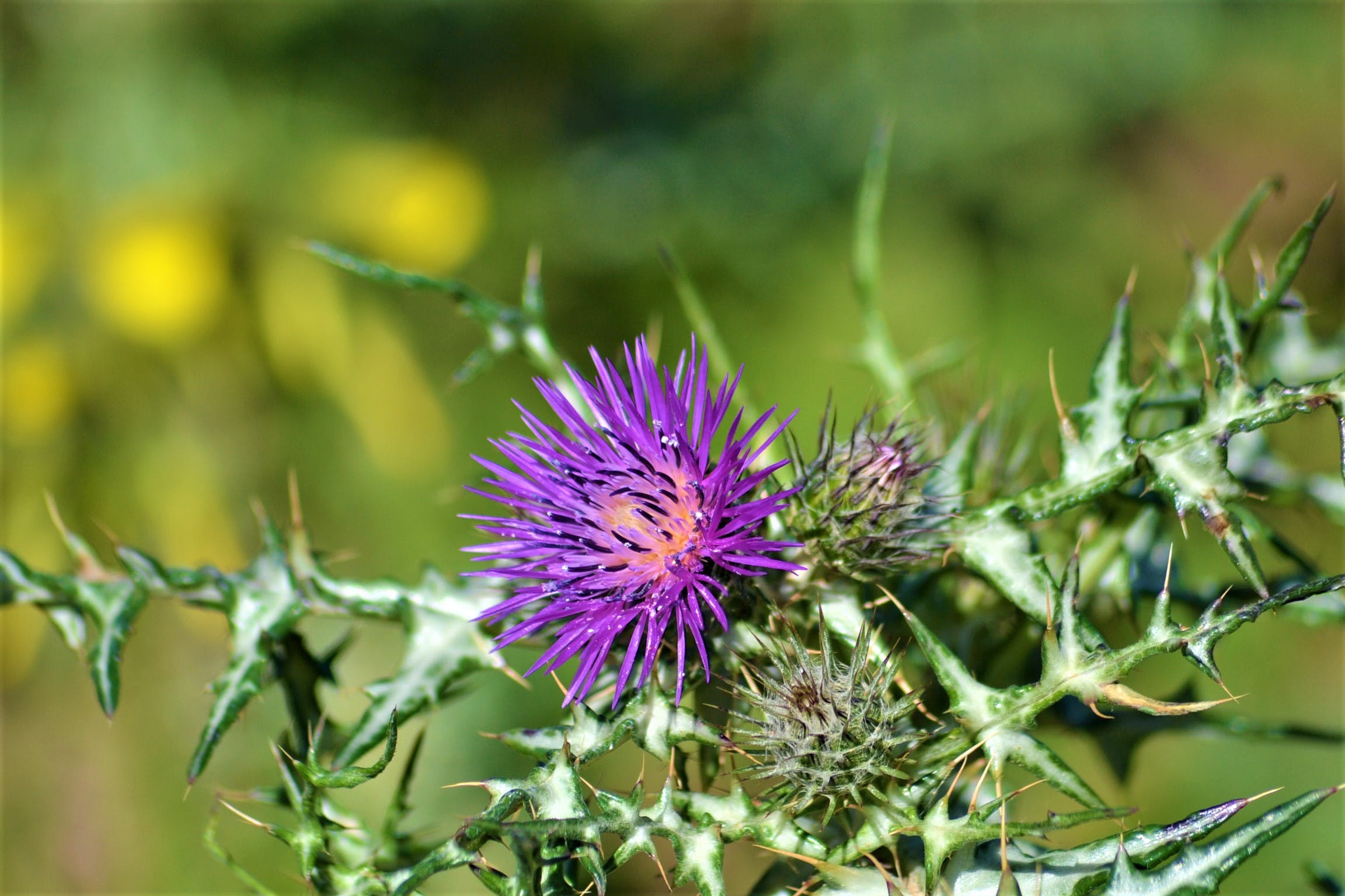 Free stock photo of estepona, flower, nature, plant