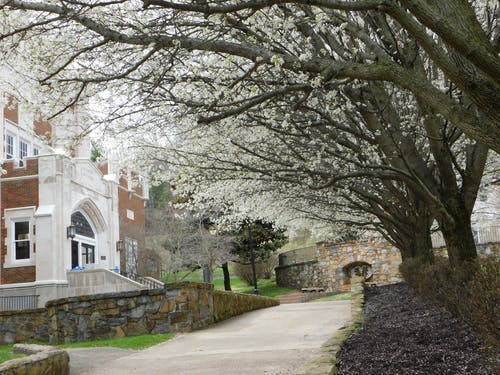 Free stock photo of blossom, campus, college, sidewalk