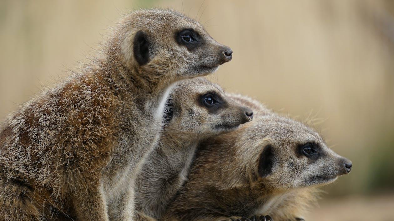 animales, animales salvajes, mamíferos