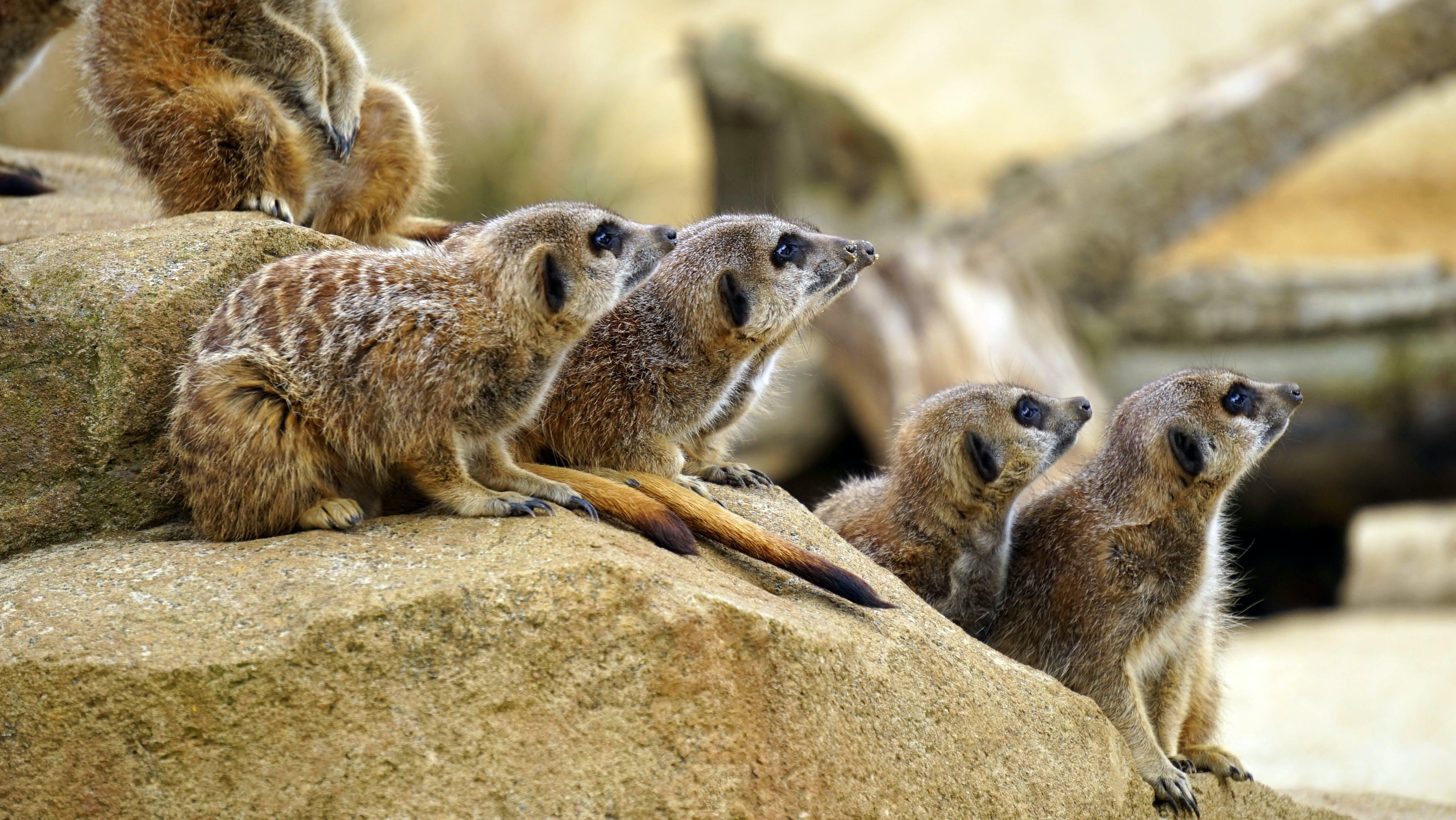 Five Brown Animals
