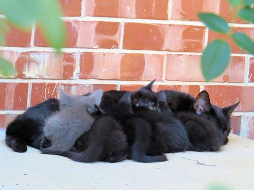嚴重餵養, 媽媽的貓, 小貓的垃圾, 野貓 的 免費圖庫相片