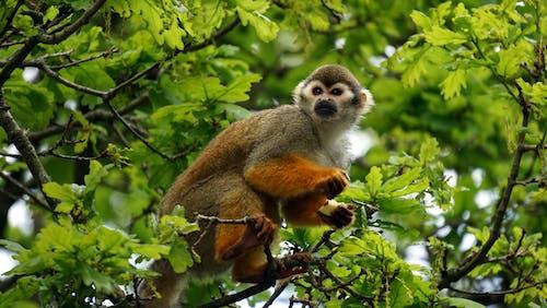 Gray Monkey on Tree