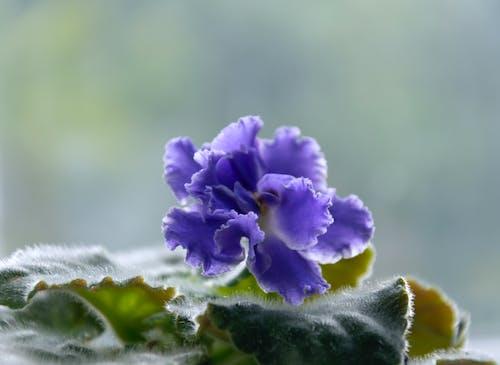 Fotos de stock gratuitas de azul, botánica, flora