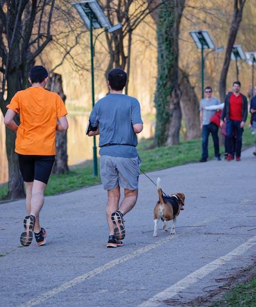 개, 공원, 나무, 바이 사이클리스트 경로의 무료 스톡 사진