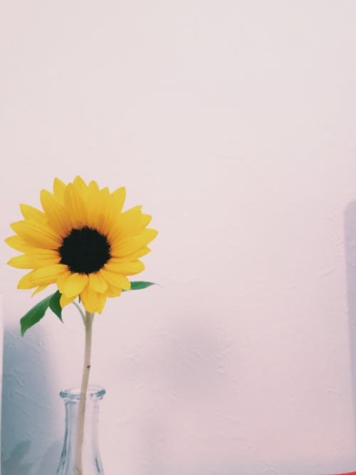 #花の無料の写真素材