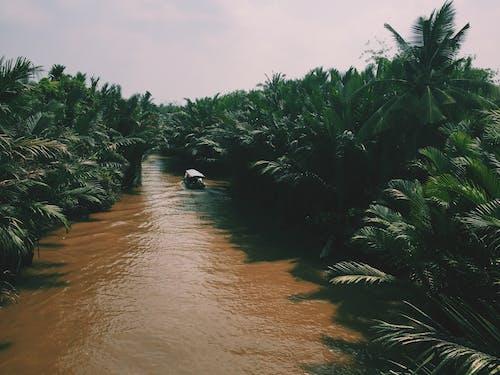 Безкоштовне стокове фото на тему «вода, Водний транспорт, дерева»