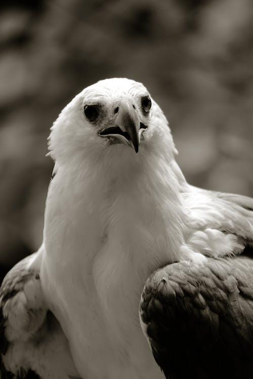 Ingyenes stockfotó # canon600d, #állat, #fekete és fehér, #kánon témában