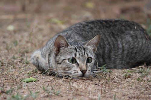 Darmowe zdjęcie z galerii z #bezczynność, #grać, #kot, #kotek