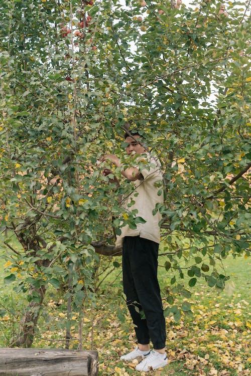 Ảnh lưu trữ miễn phí về bắn dọc, cây, cây táo