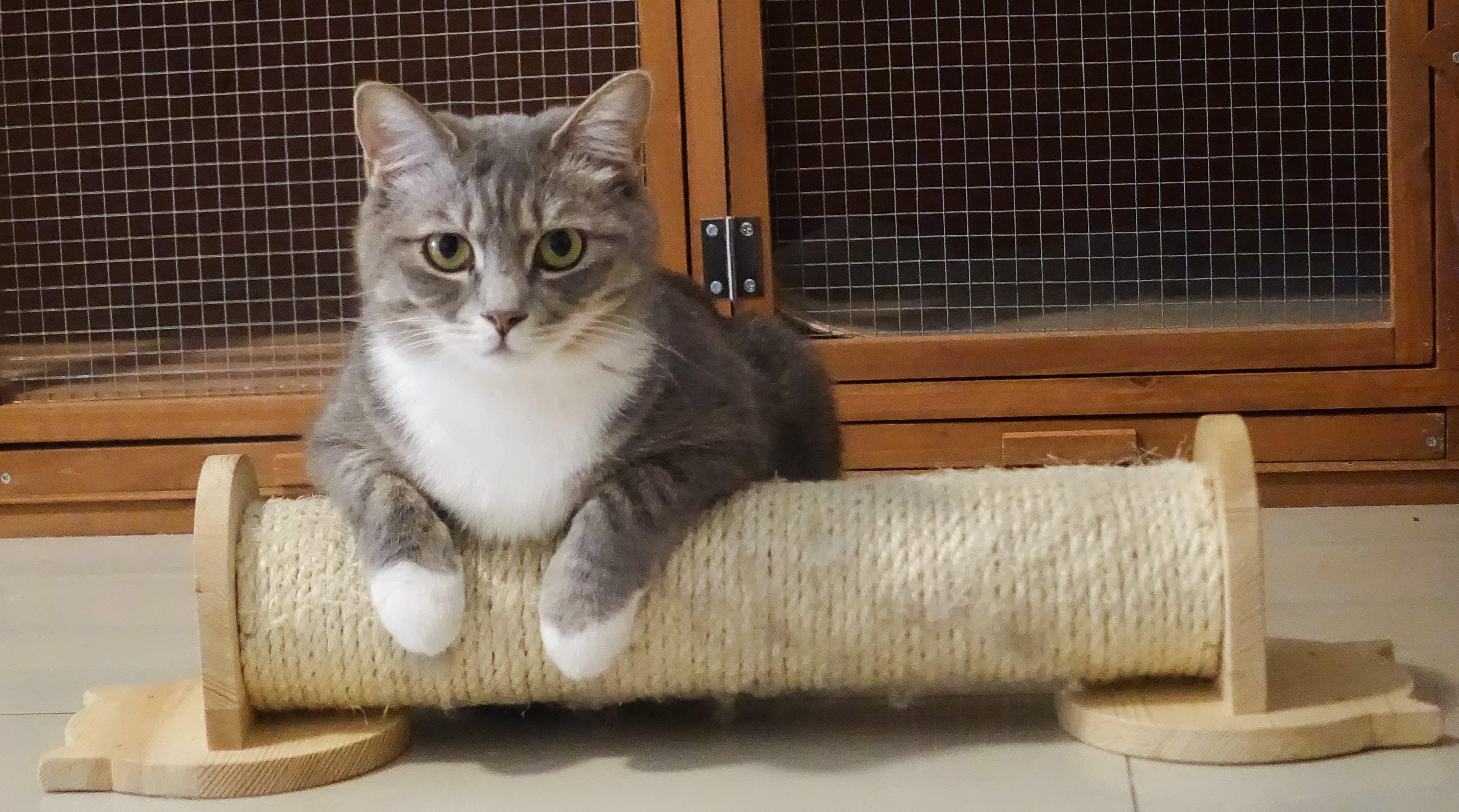 Photography of Gray Tabby cat