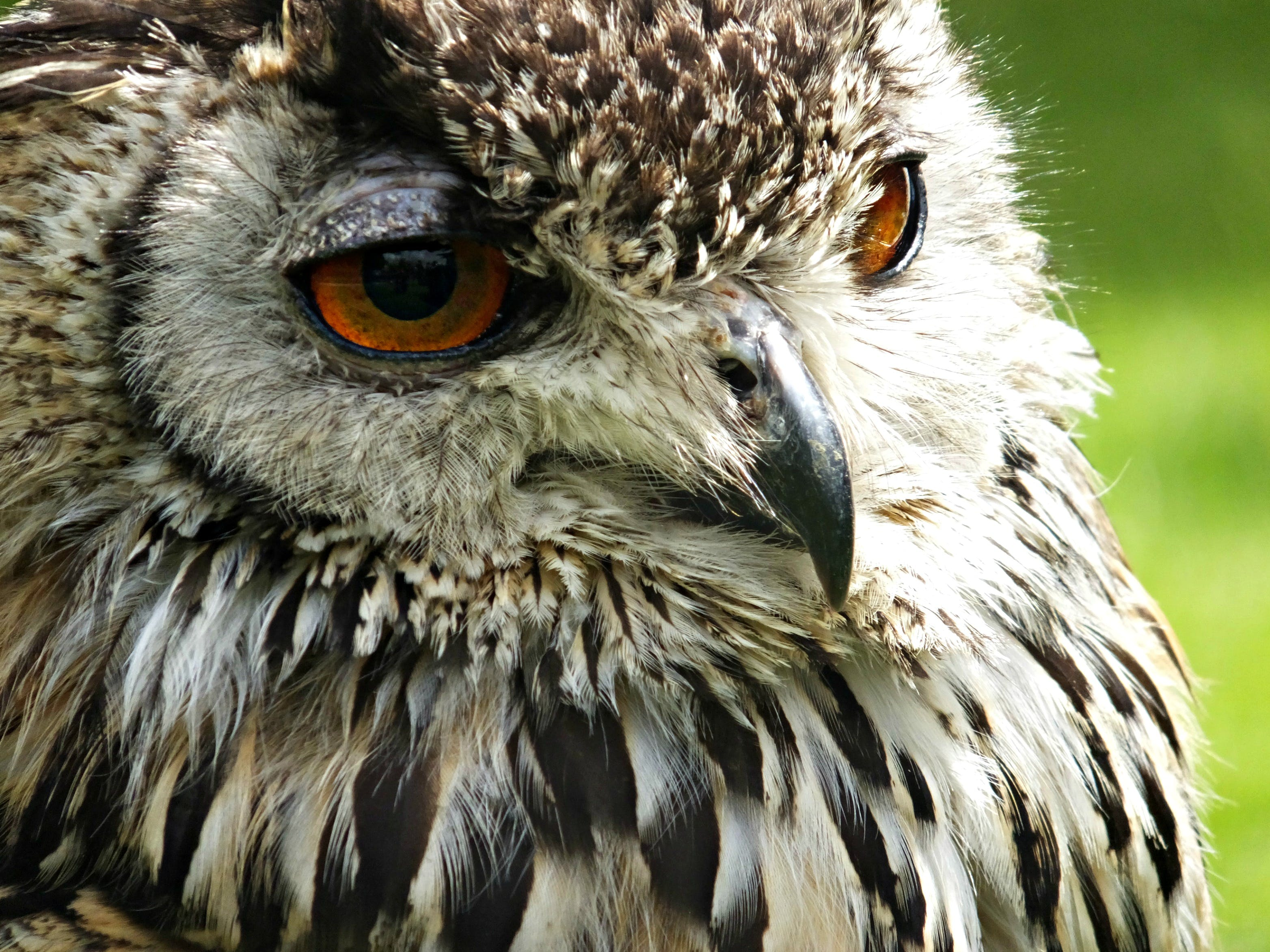 Brown and White Owl in Shallow Photo
