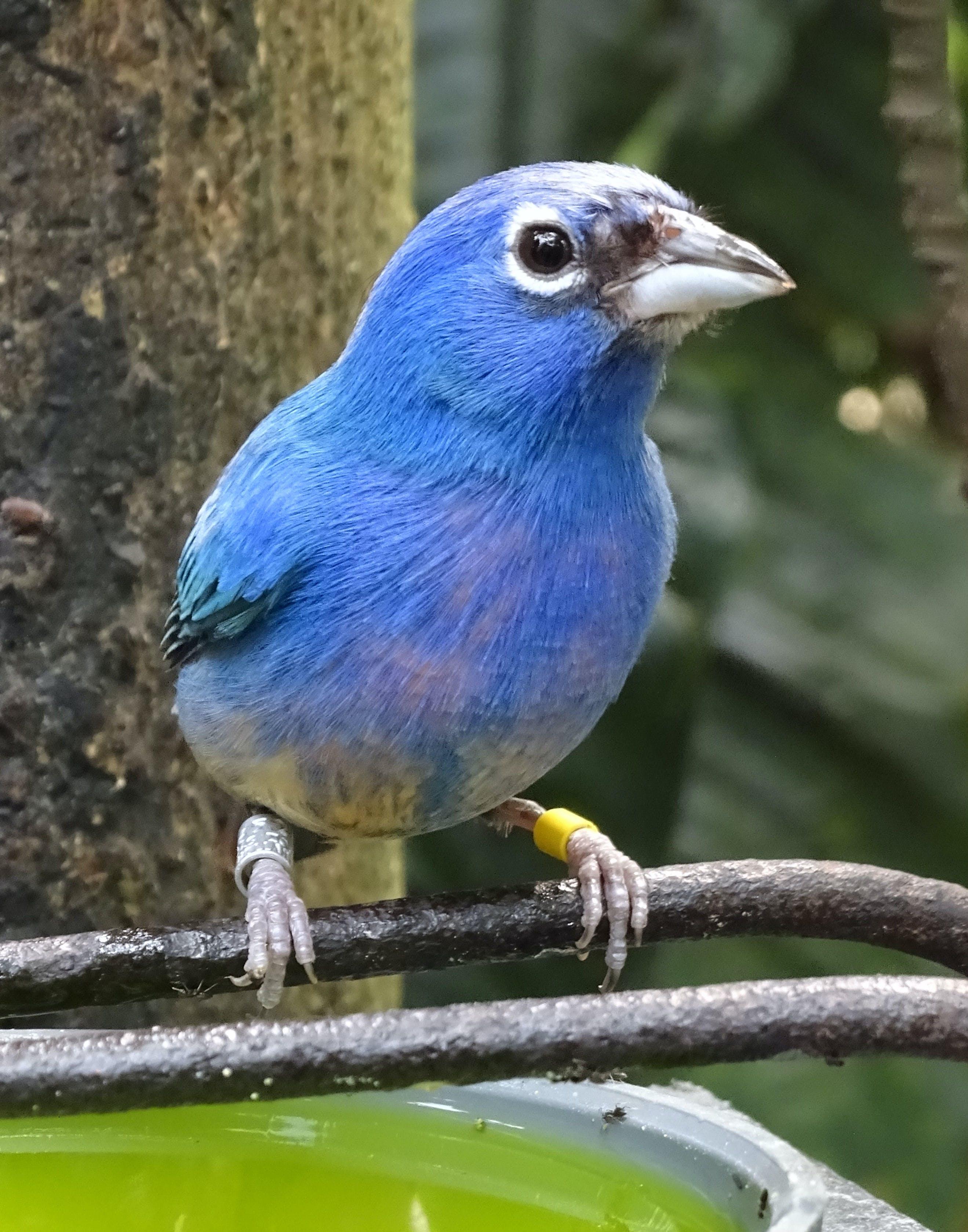 Blue Bird Perched on Black Metal Rod