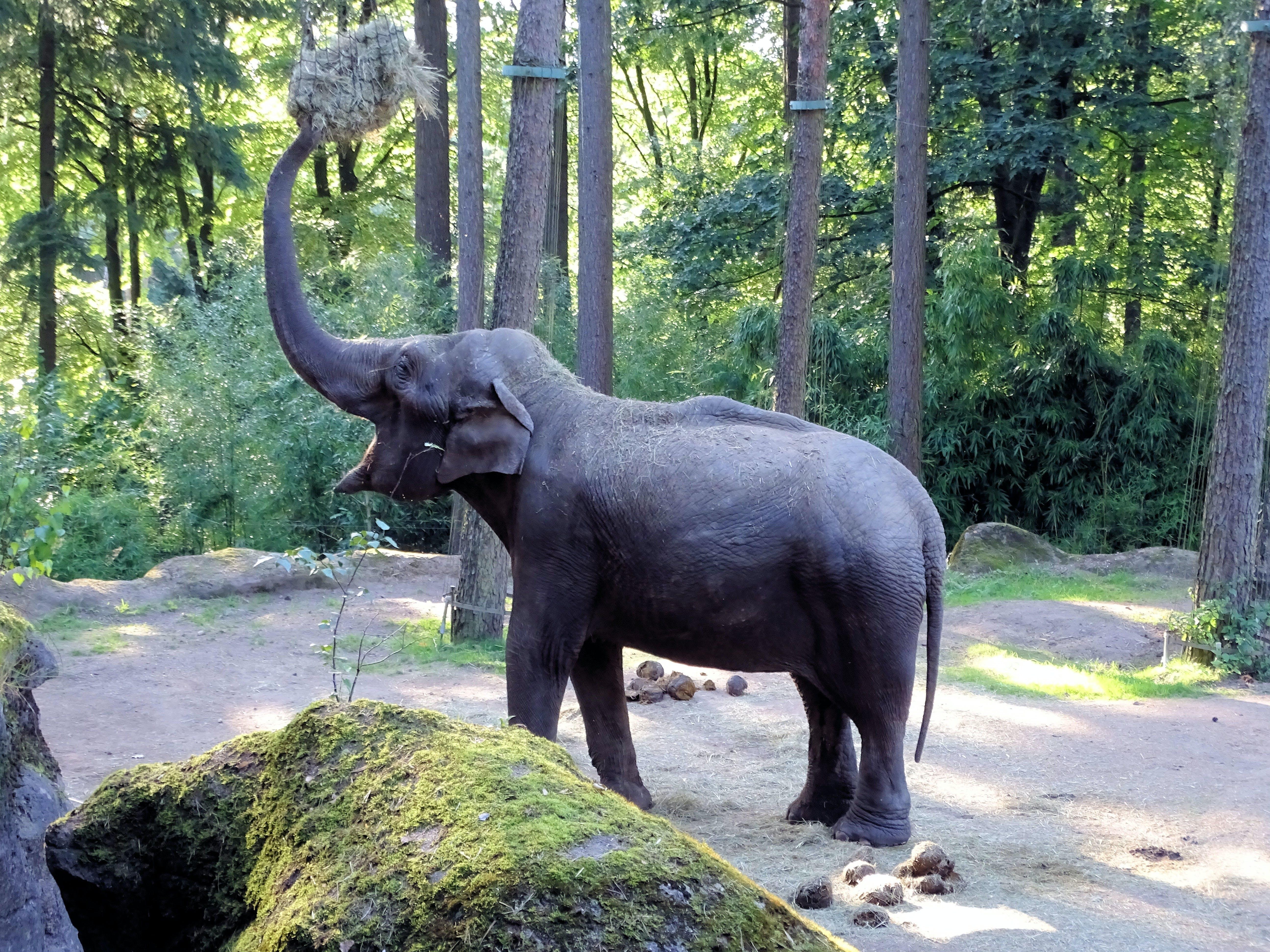 Základová fotografie zdarma na téma park, savec, slon, velký