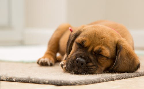 Short-coated Brown Puppy Sleeping on Brown Mat